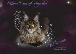 Superb1A Design - Portfolio - Maine Coon of Superbia