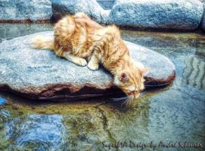 Artwork für Peru (Lima) - Trinkende Katze